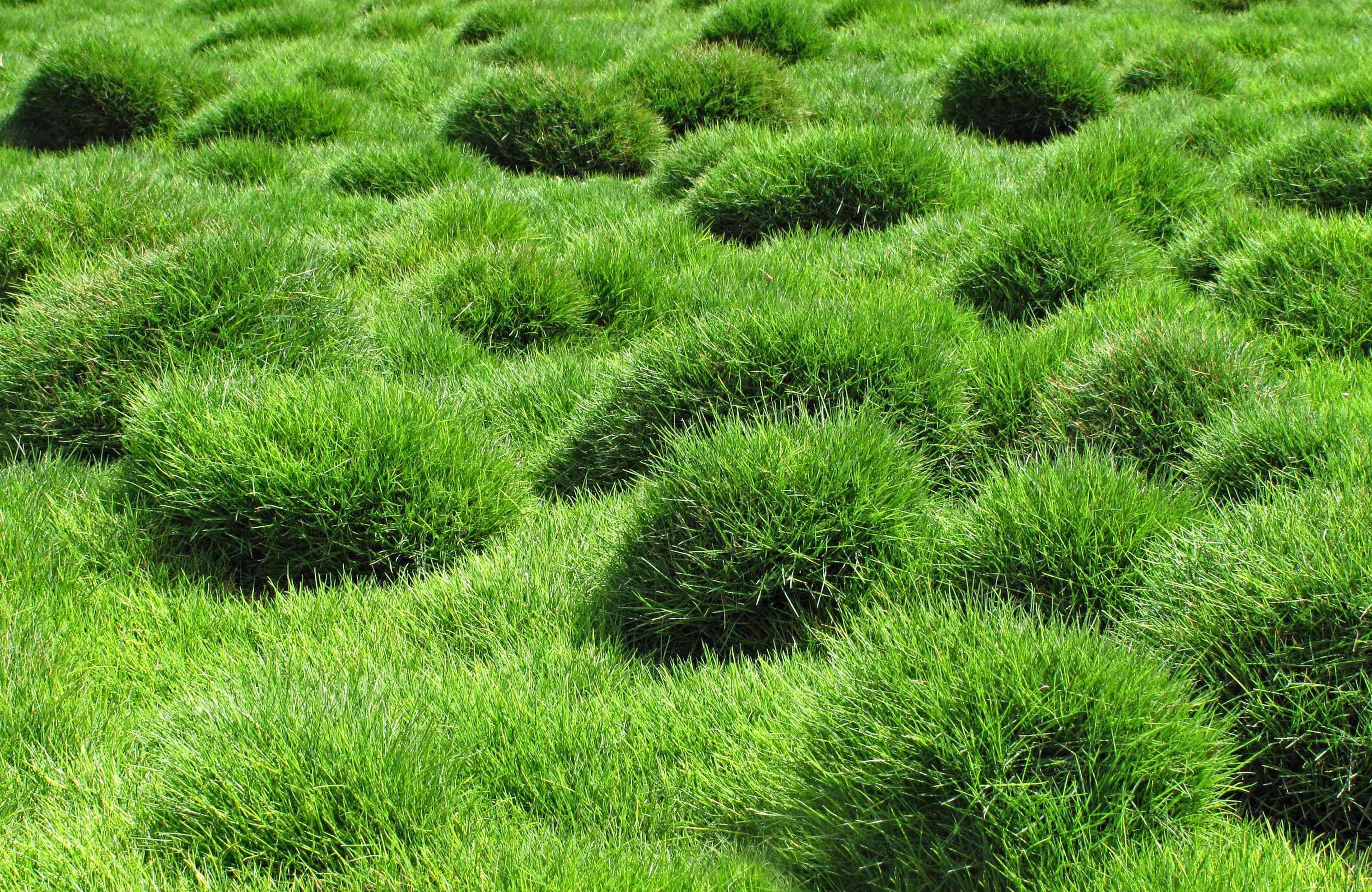 A field of bright green grass