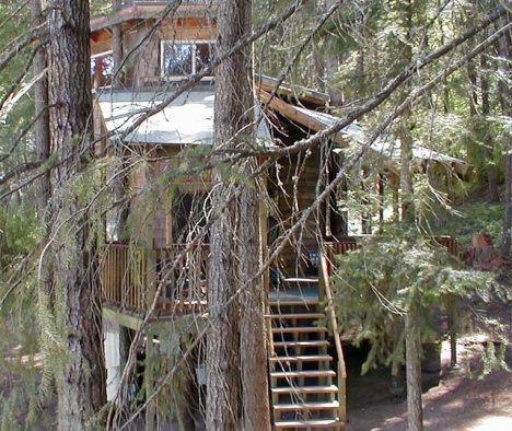 lothlorien treehouse image exterior photo