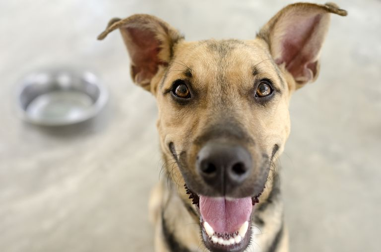 Entrega de comida personalizada ... para tu perro