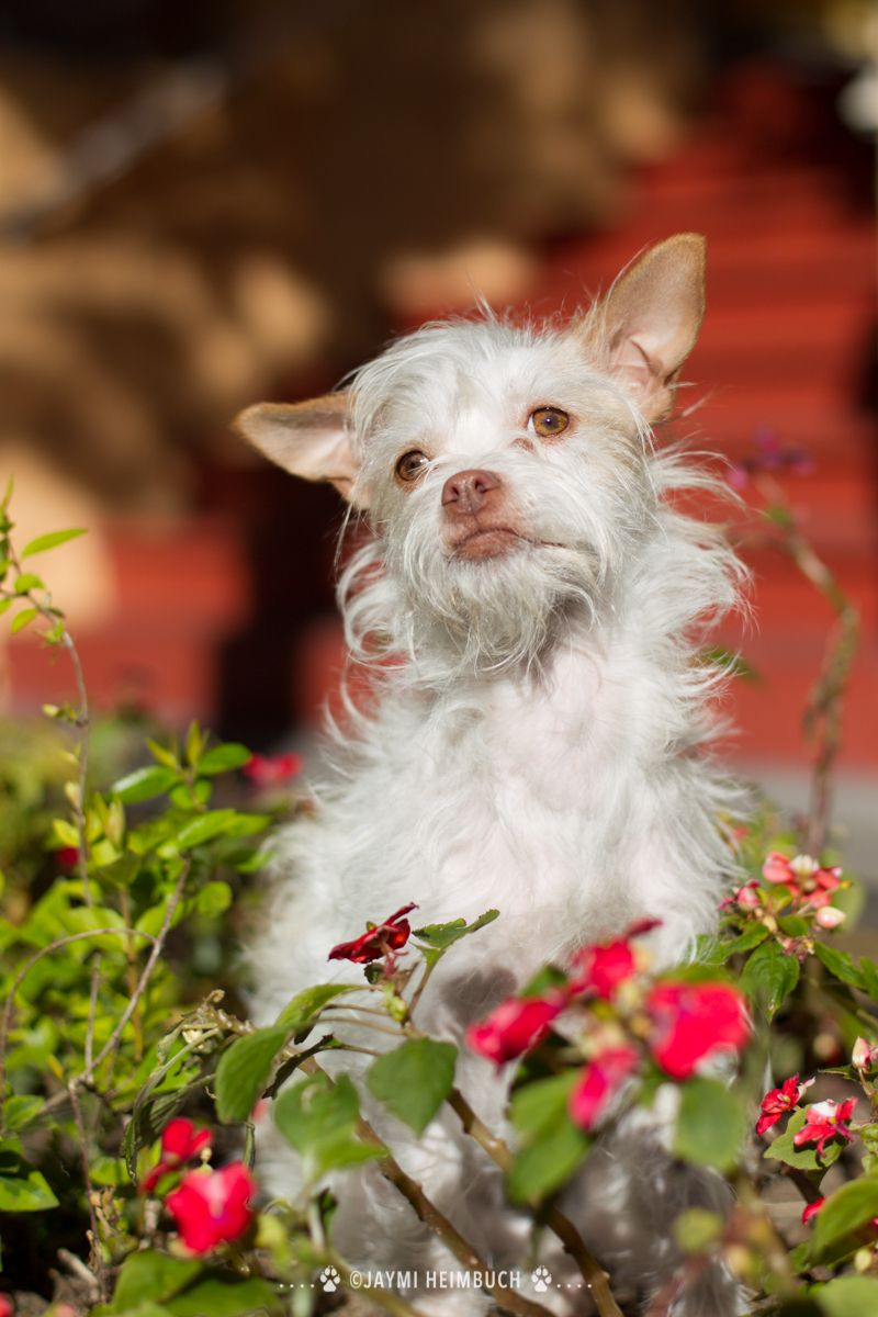small white dog in flowers