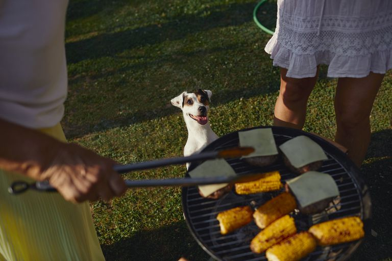 Dog standing on its hind feet looking at a grill