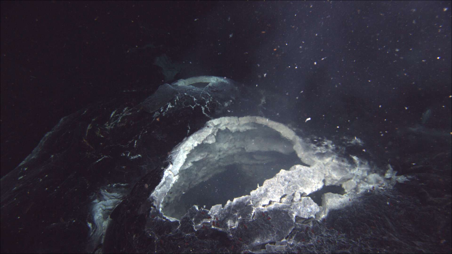 snowblower hydrothermal vent, Axial Seamount
