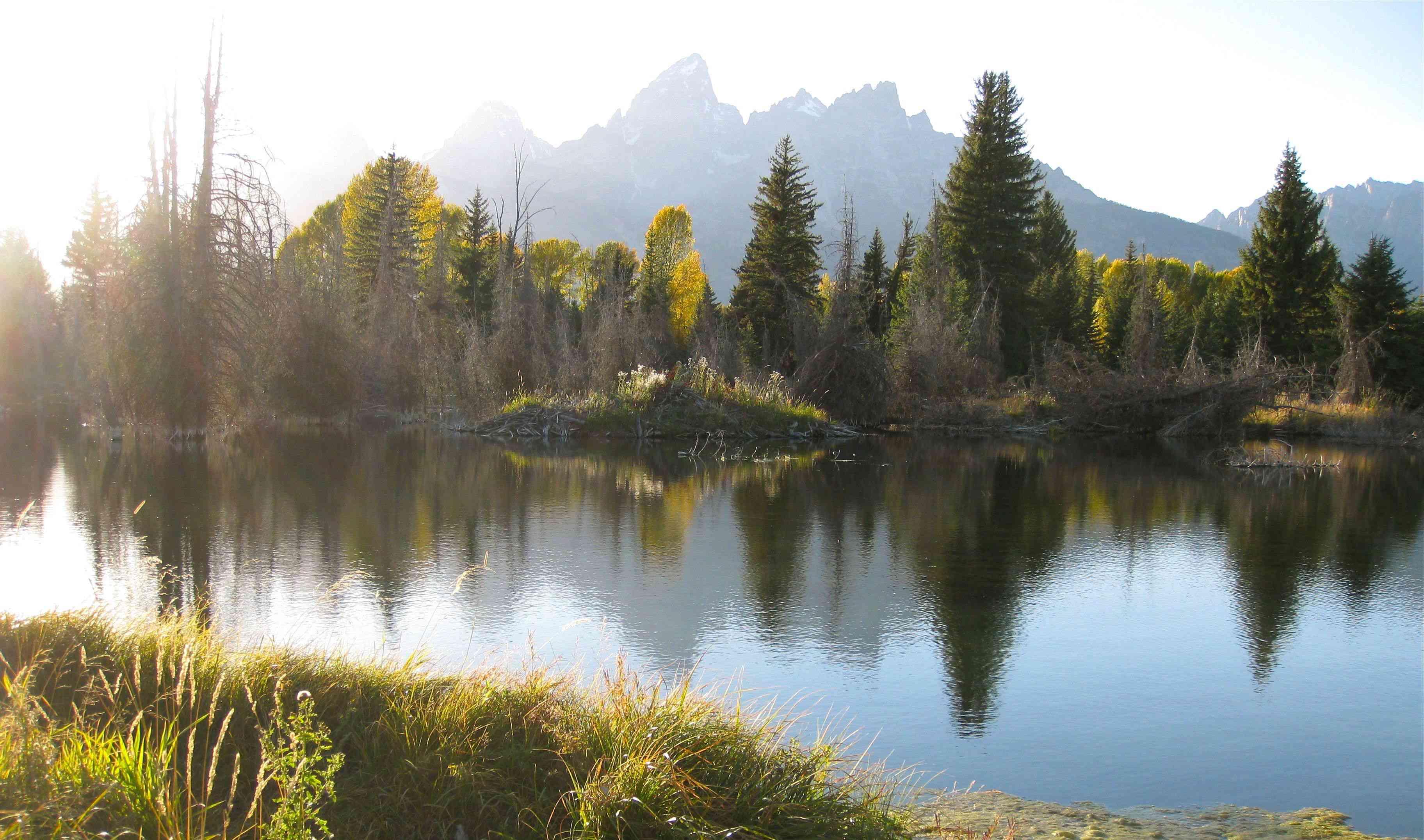 beaver pond in Wyoming