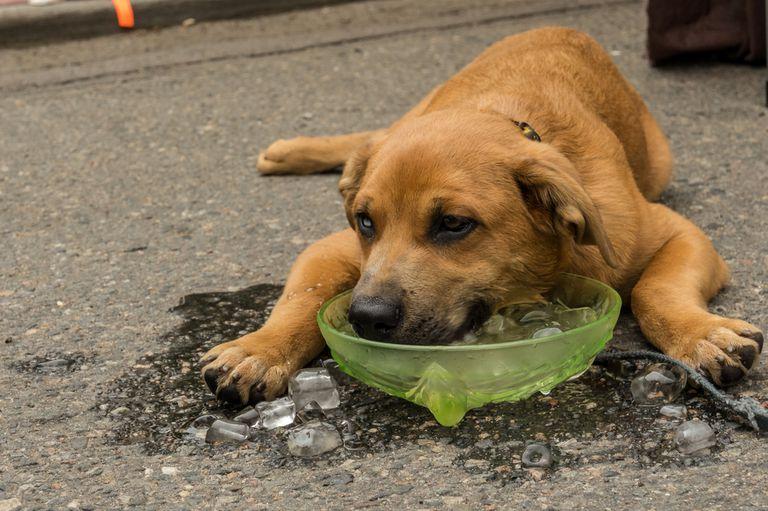 Guía de supervivencia para perros en climas cálidos