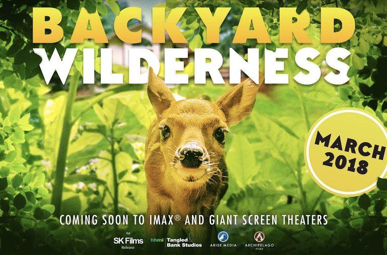Nueva película IMAX 'Backyard Wilderness' demuestra que no hay lugar como el hogar