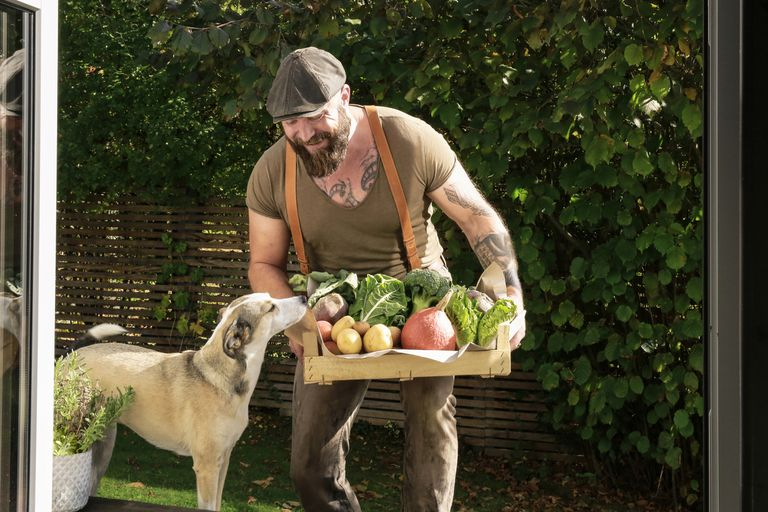 A man with tattoos shows a dog a box of fresh vegetables.