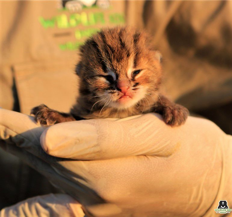 Farmers Spot the World's Tiniest Kitten in a Sugar Cane Field Just in Time