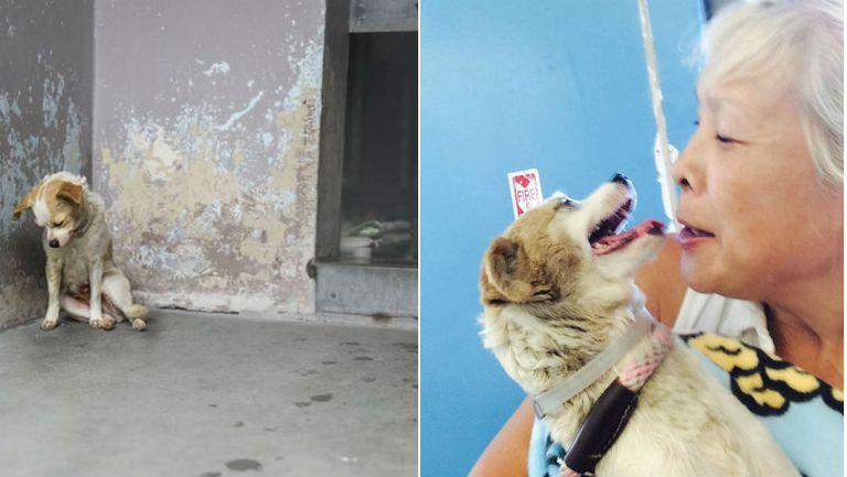 Triste perro de refugio encuentra su hogar para siempre después de que alguien le toma una foto