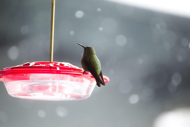 hummingbird perched on hummingbird feeder in the snow