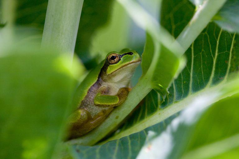 ¿Por qué tantos animales salvajes terminan en paquetes verdes?