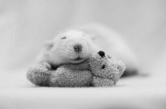 A rat snuggles with a tiny teddy bear in a black and white photograph