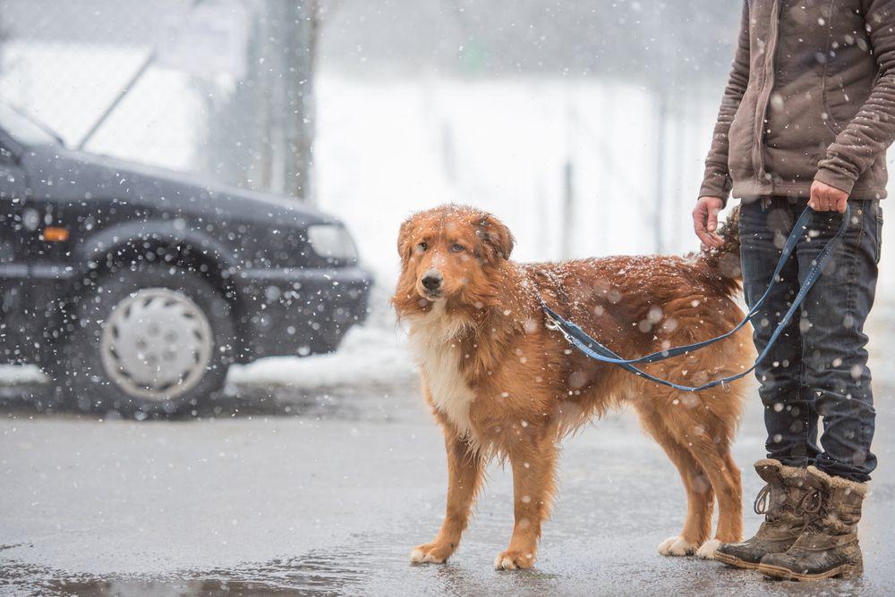 woman walking dog in winter