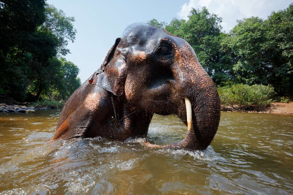 elephant swimming in a body of water