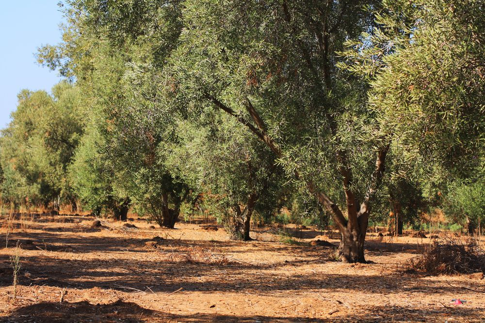 Happy Tu Bishvat, the New Year for Trees