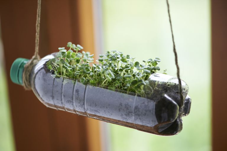 Recycled bottle as planter with micro green seedlings
