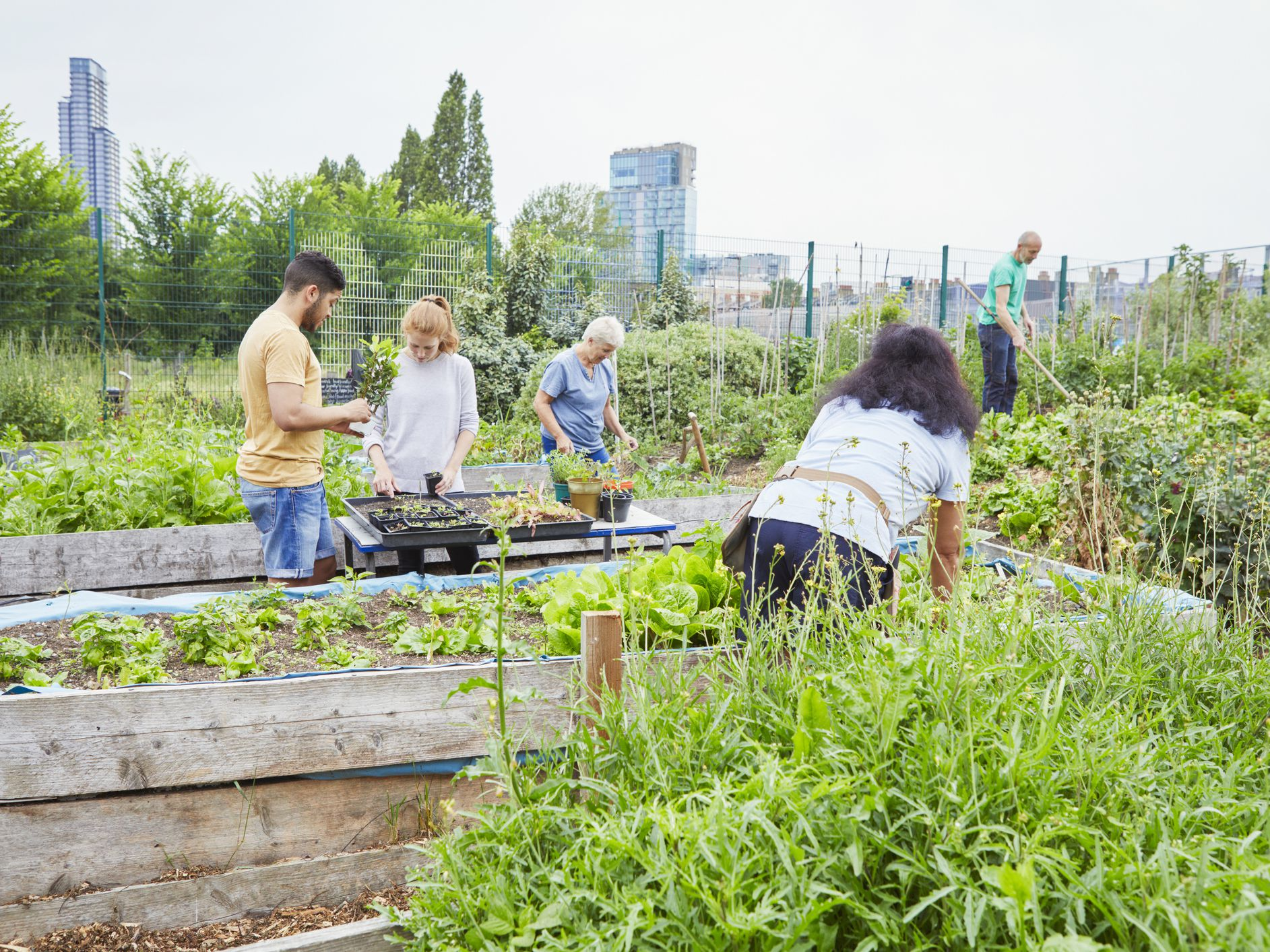 Are You Wondering How to Start a Community Garden?
