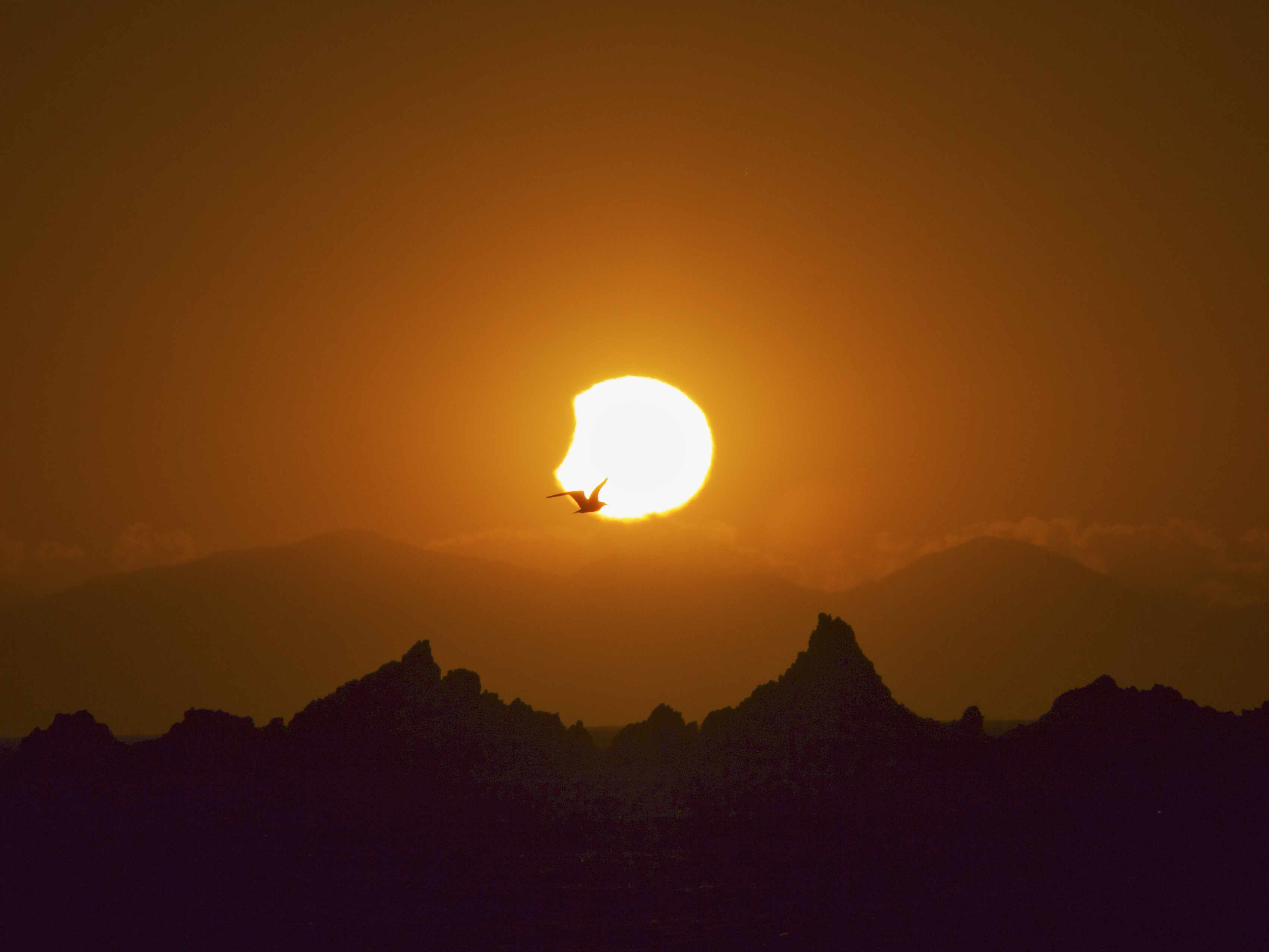 seagull and solar eclipse sunset