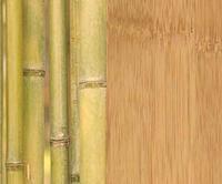 bamboo floor.jpg