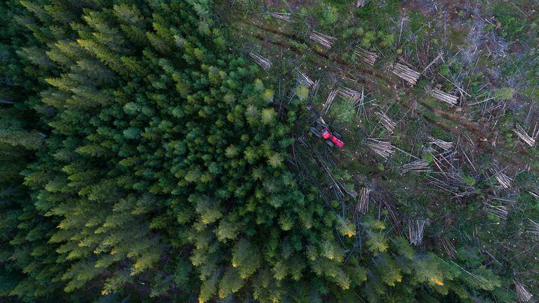 deforestation tree being cut down