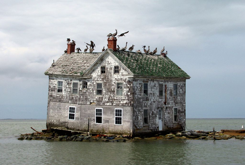Birds perched on abandoned house on Holland Island