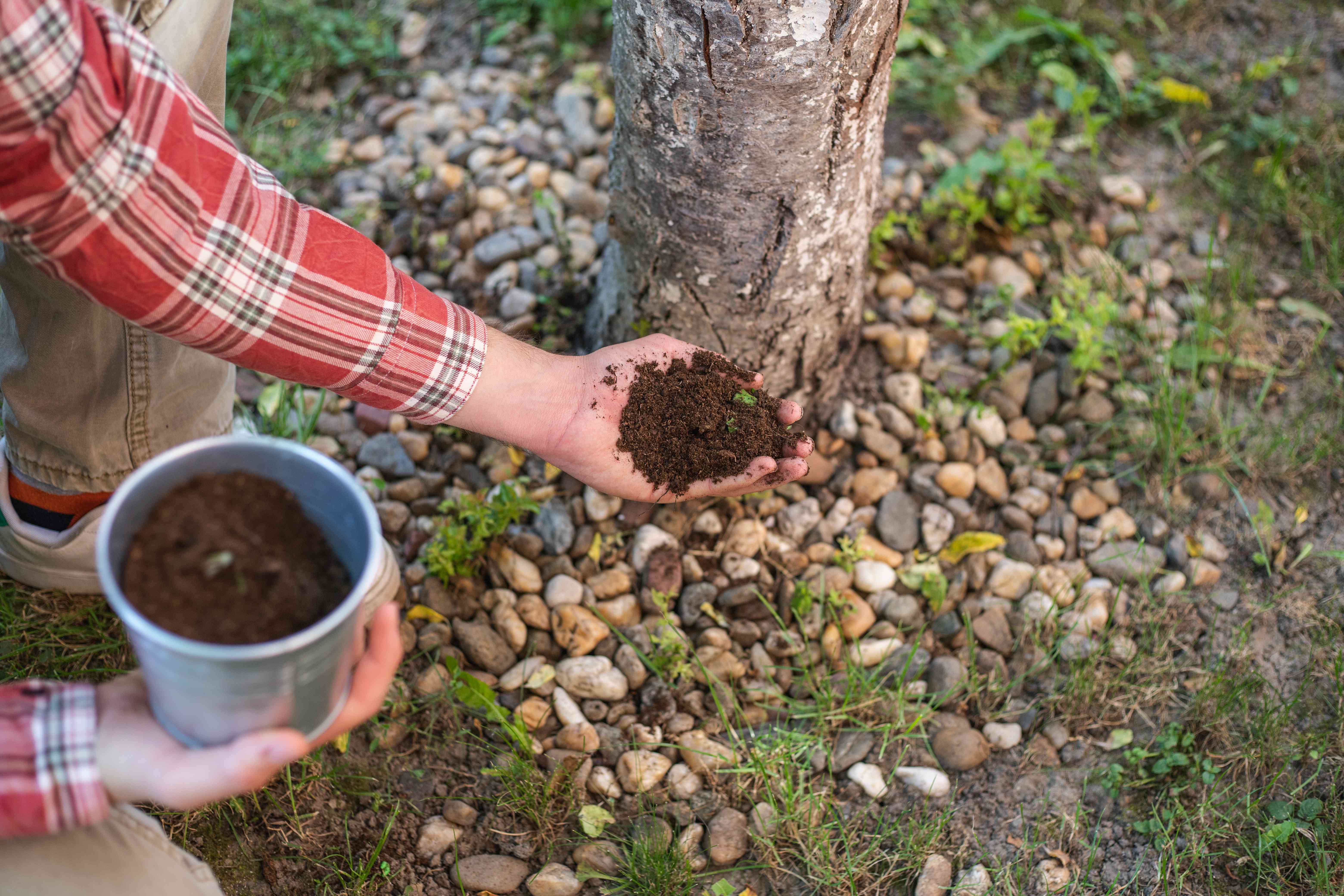 person in plaid shirt crouches down near tree holding compost dirt in bare hands