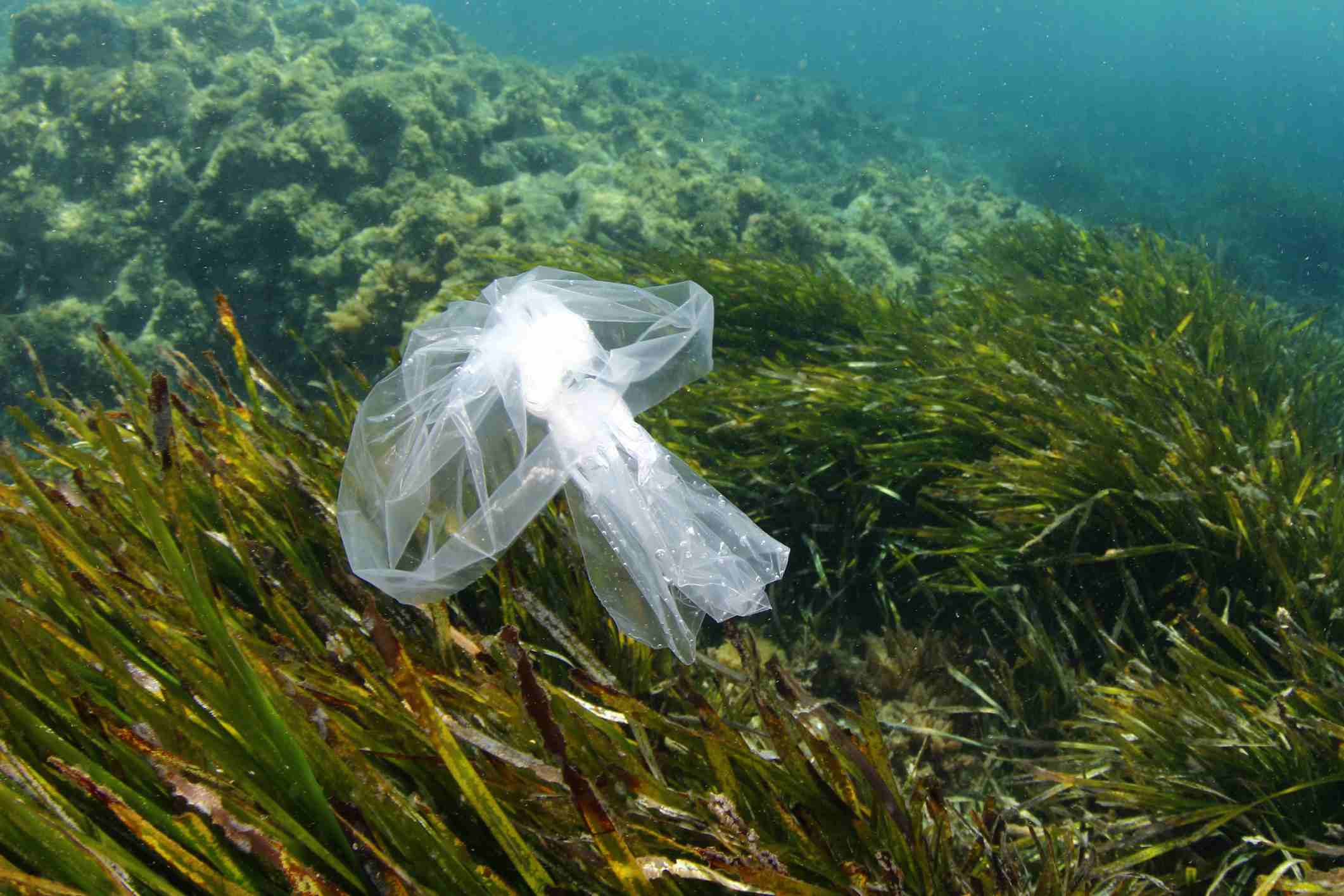 Plastic bag at sea. These can be dangerous to sea turtles who mistake them for food, such as jellyfish.