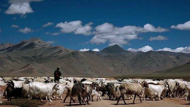 shepherds in Ladakh