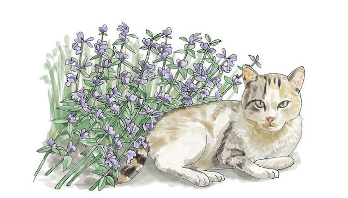 Illustration of cat next to catnip plant.