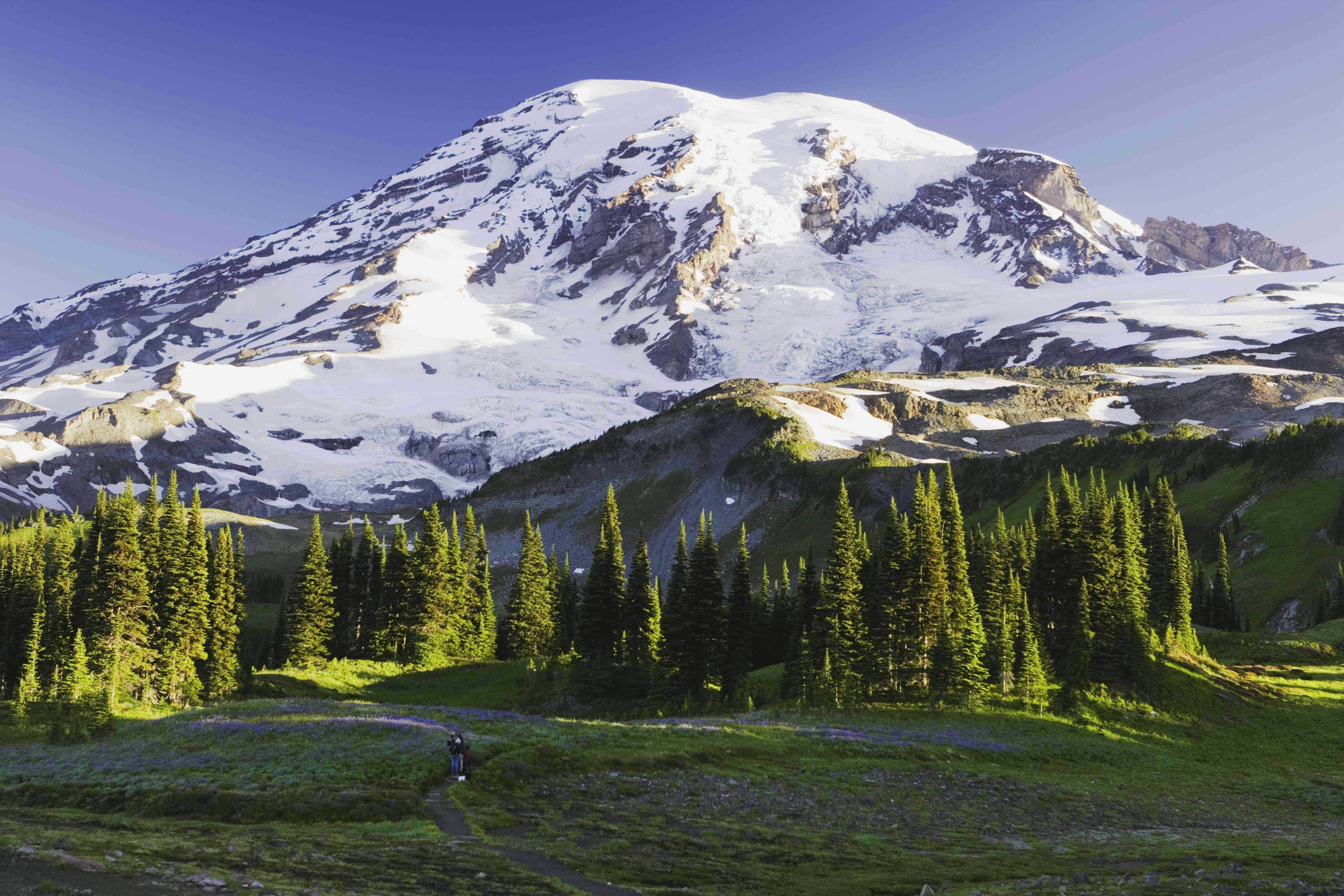 People hiking through forest in the shadow of Mount Rainier