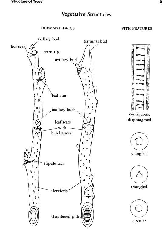 Anatomy of a Twig
