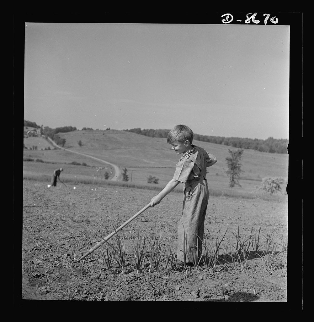 Young boy using a hoe in a field