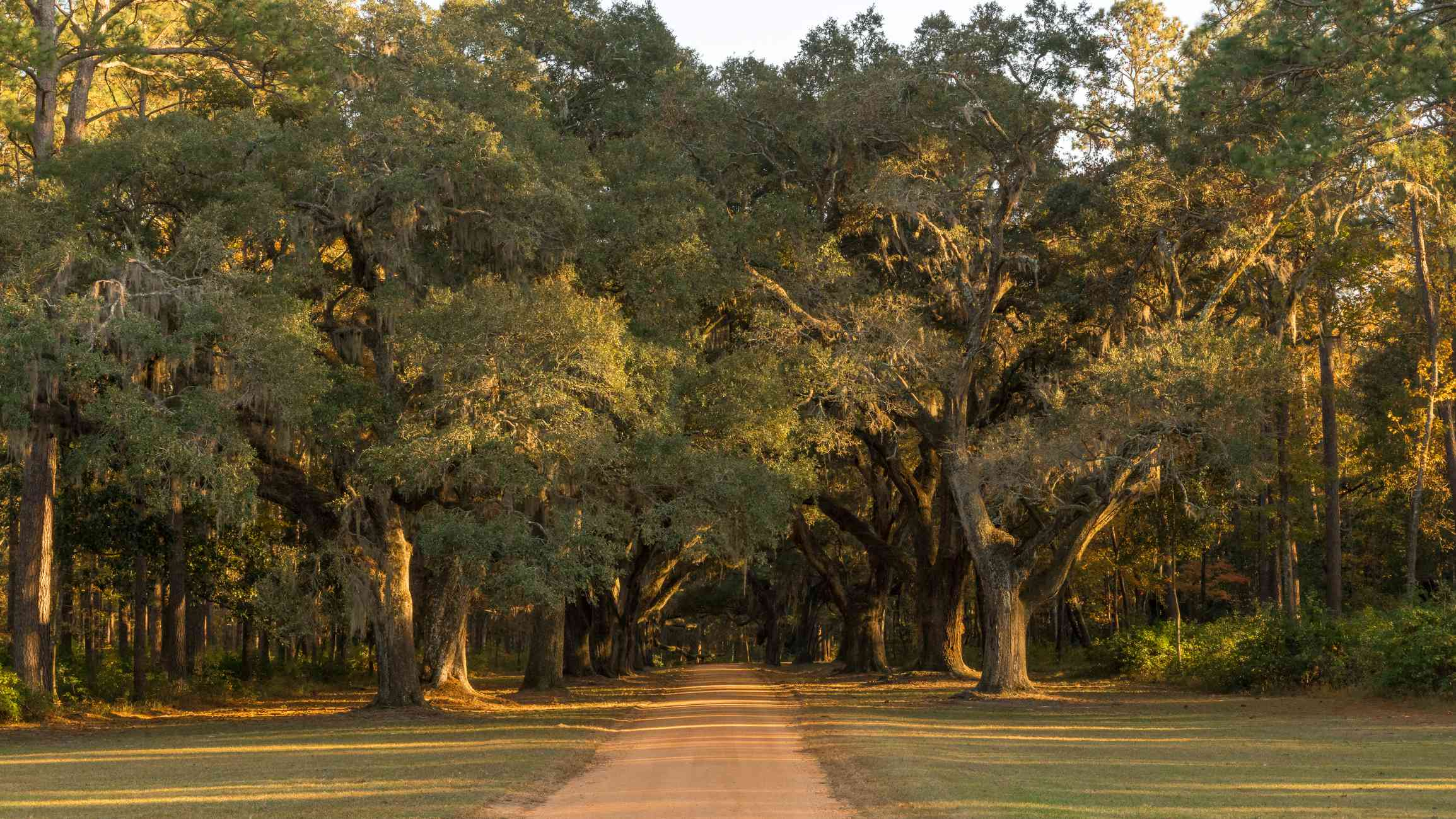 Southern Red Oaks
