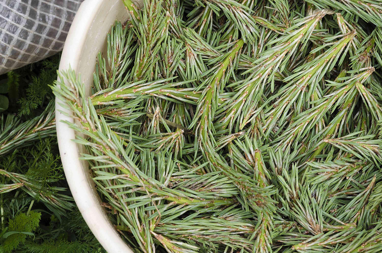 bucket of evergreens