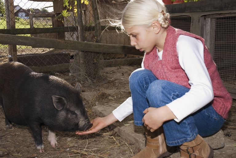 Girl with a pot-bellied pig in barn
