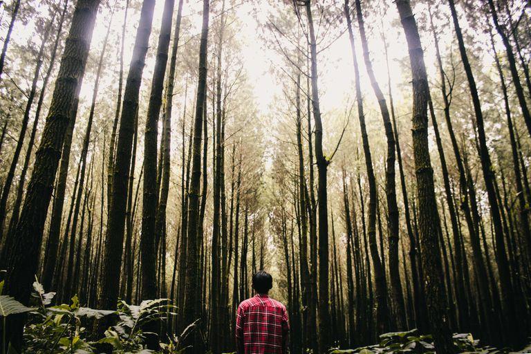 ¿Se puede plantar un billón de árboles revertir el daño del cambio climático?