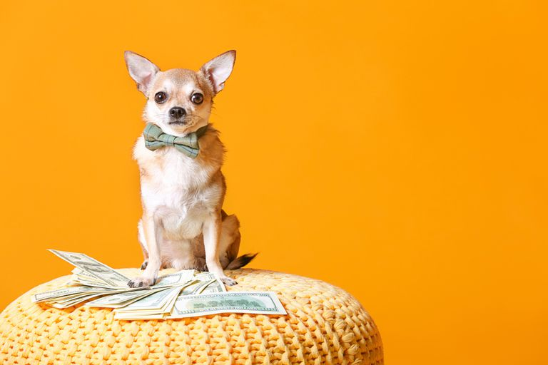 Little dog wearing a bow tie on top of a pile of money against an orange background