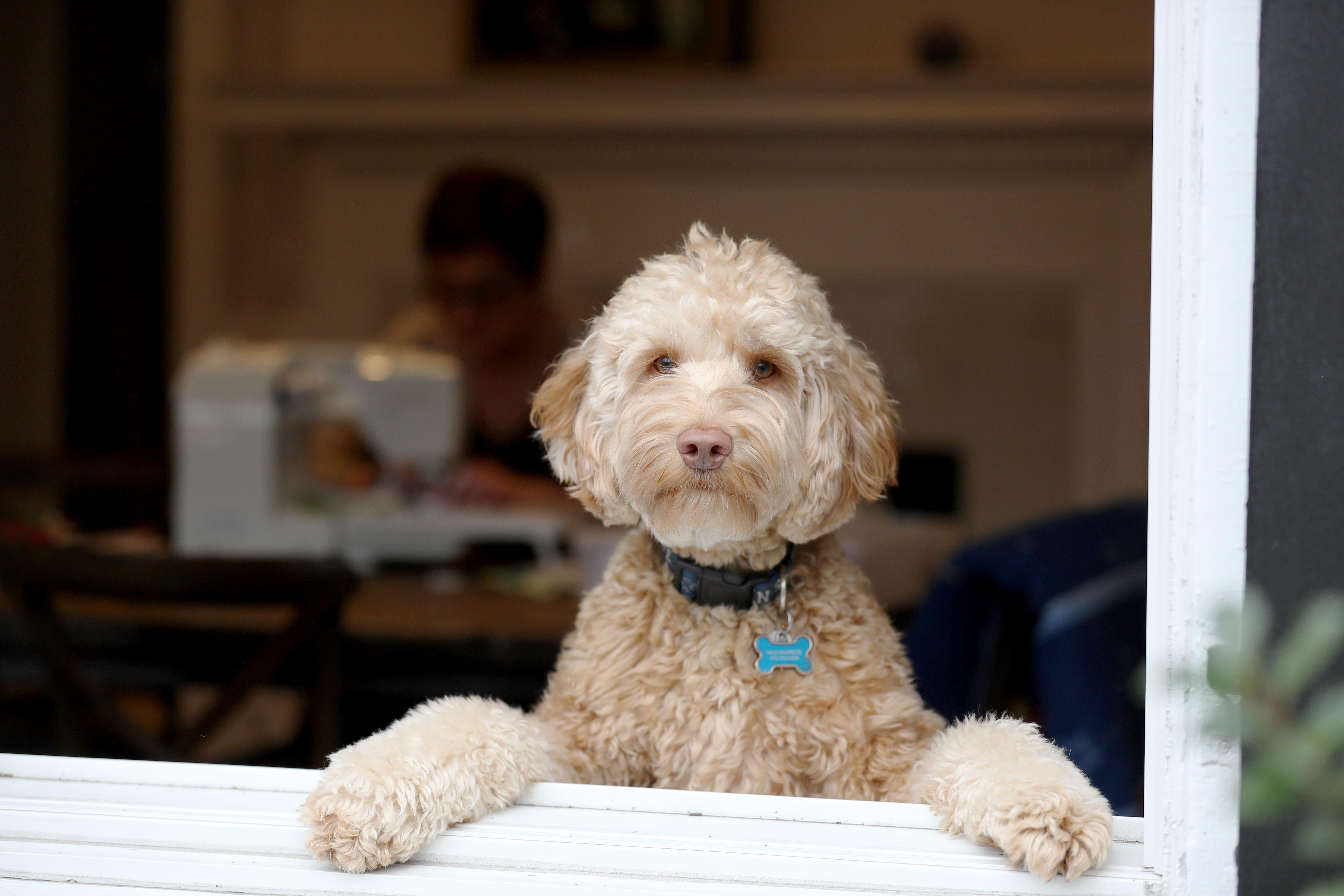 bol.com | Dog Man 6, Dav Pilkey | 9781338236576 | Boeken | 3648x5472