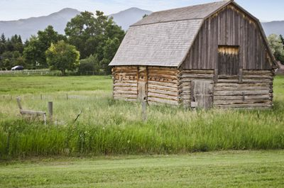An antique barn in a meadow of tall, green grass