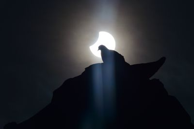 pigeon during partial solar eclipse
