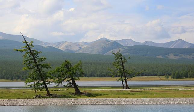 Windswept trees on a cloudy day at Lake Hovsgol in Mongolia