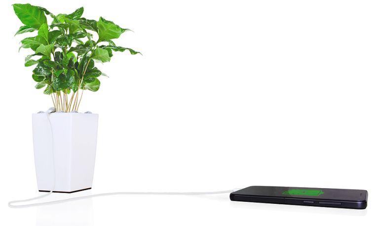 Bioo promete la electricidad más ecológica con una maceta con carga de teléfono