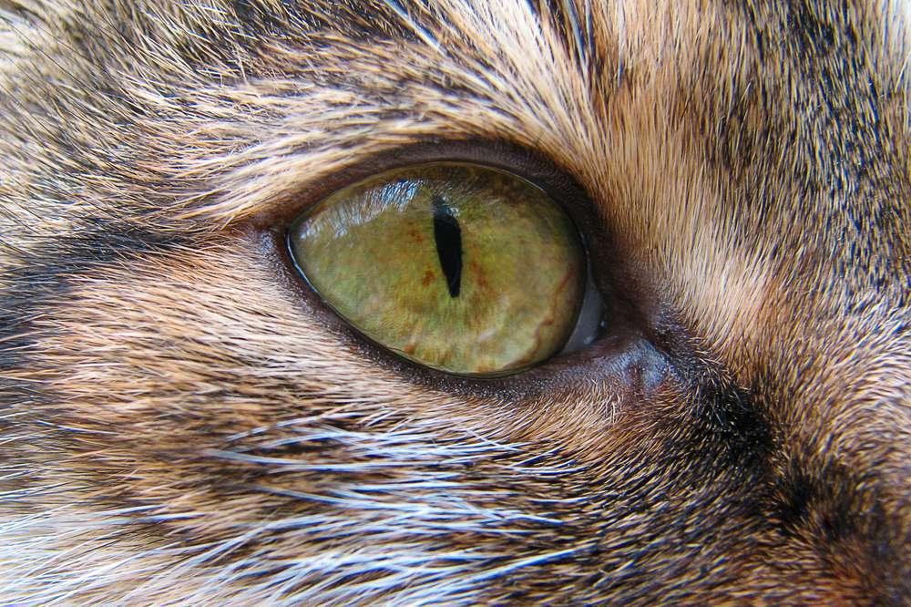 cat's eye close up