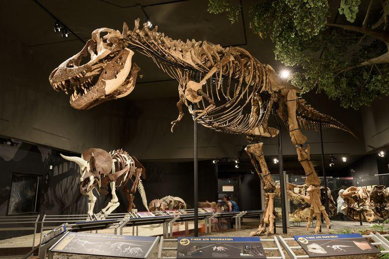 T. Rex puede haber tenido un par de labios completos