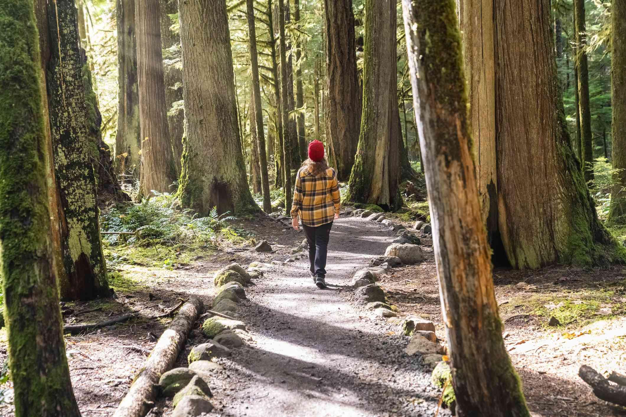 Hiking on a designated trail