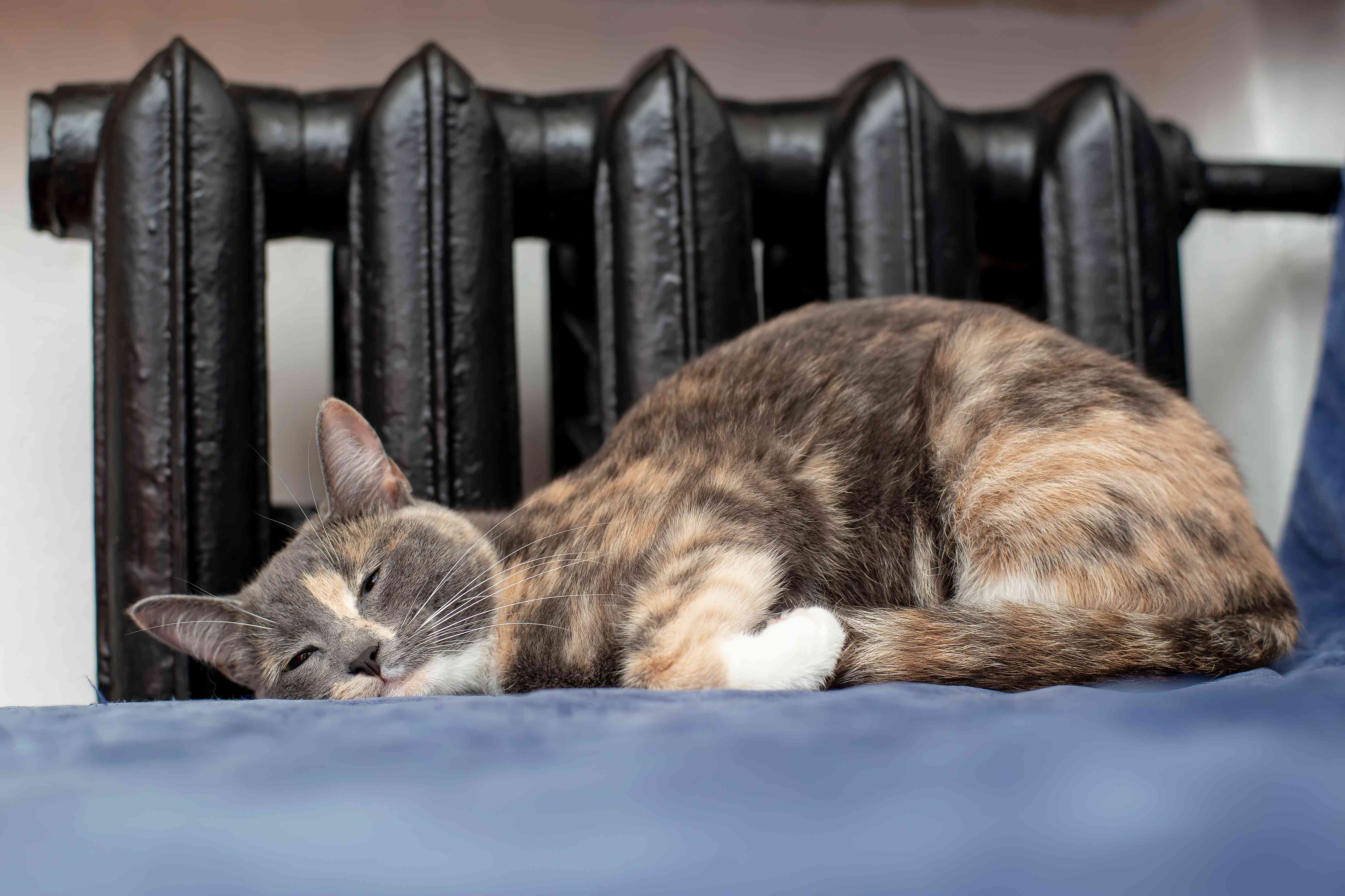 A cat curled up in front of a radiator