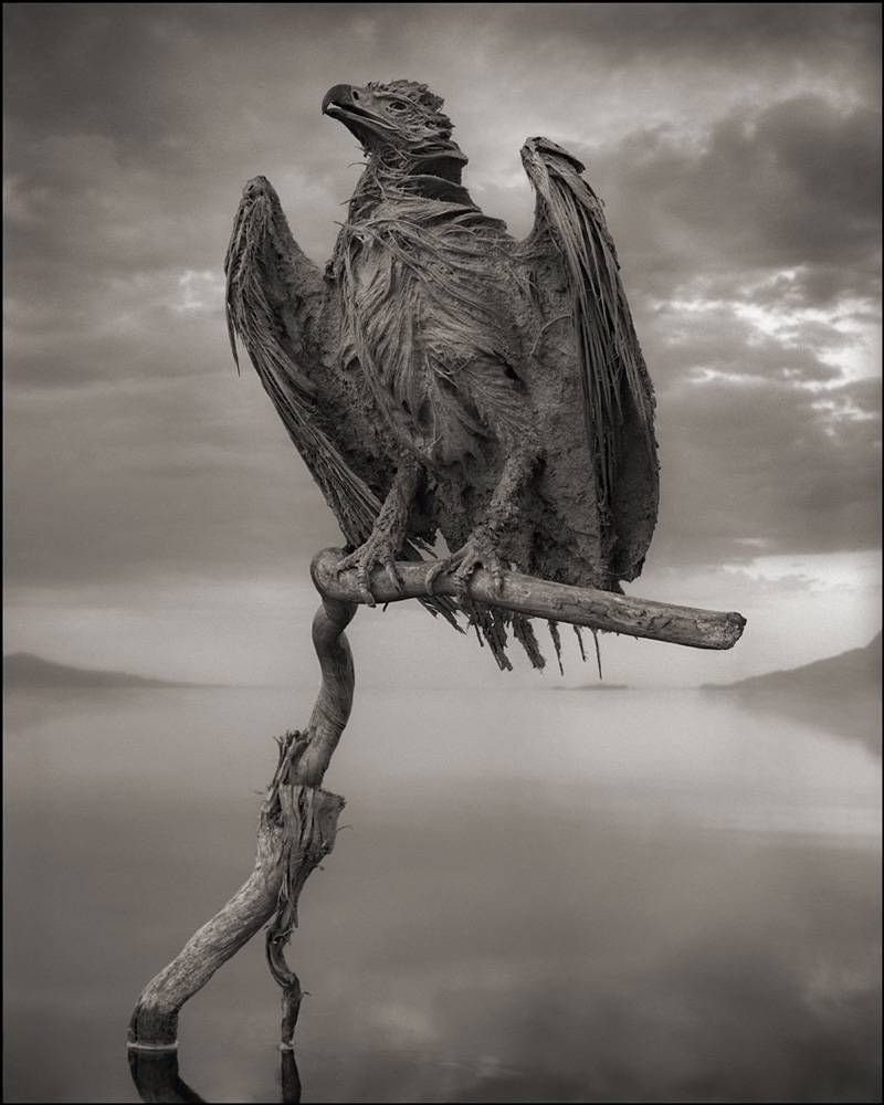 Nick Brandt photo of animal calcified by Lake Natron