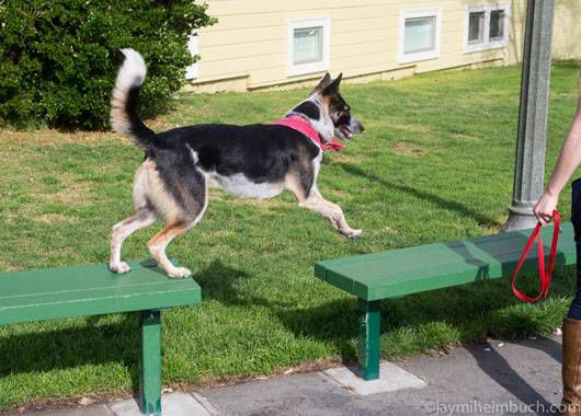 Niner hops across two benches