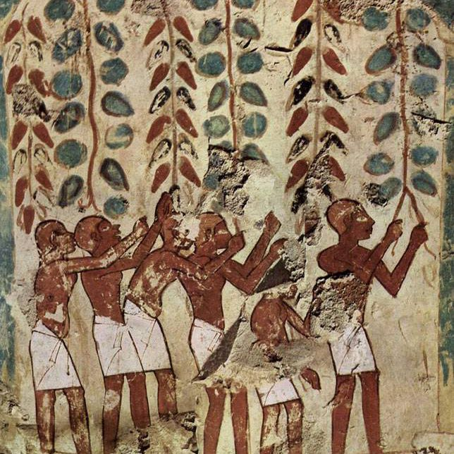A painting of ancient Egyptians gathering grapes
