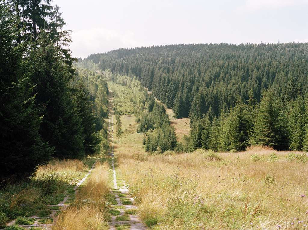 Forest and meadow in the European Green Belt, Germany