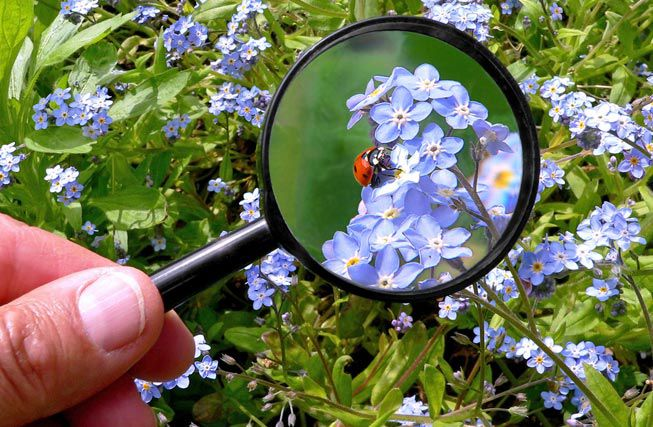 Magnifying glass over a ladybug on a plant